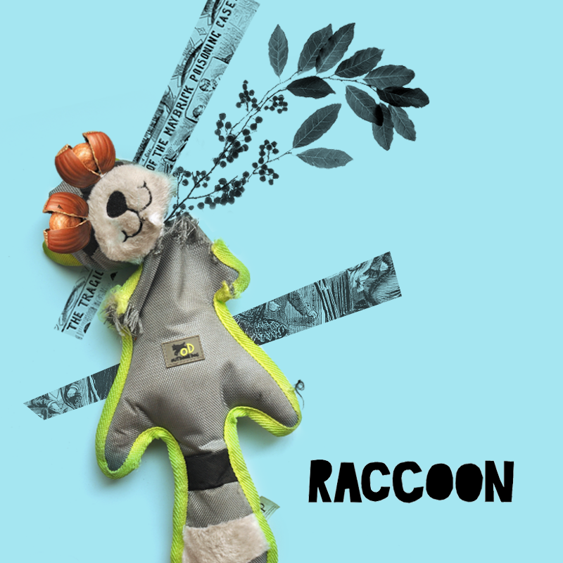 01_Raccoon